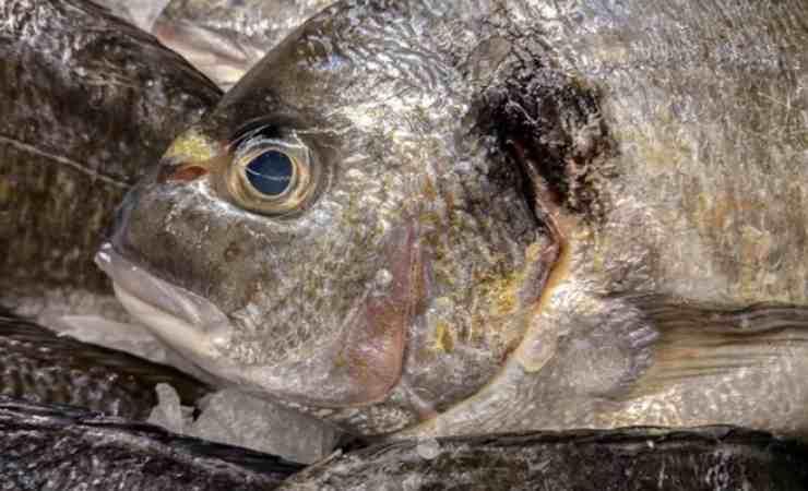 Trucco riconoscere pesce fresco