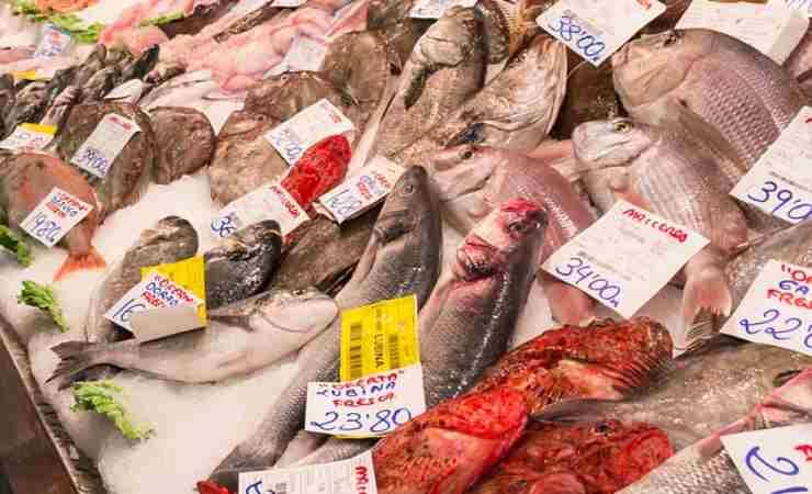 pesce fresco quale scegliere