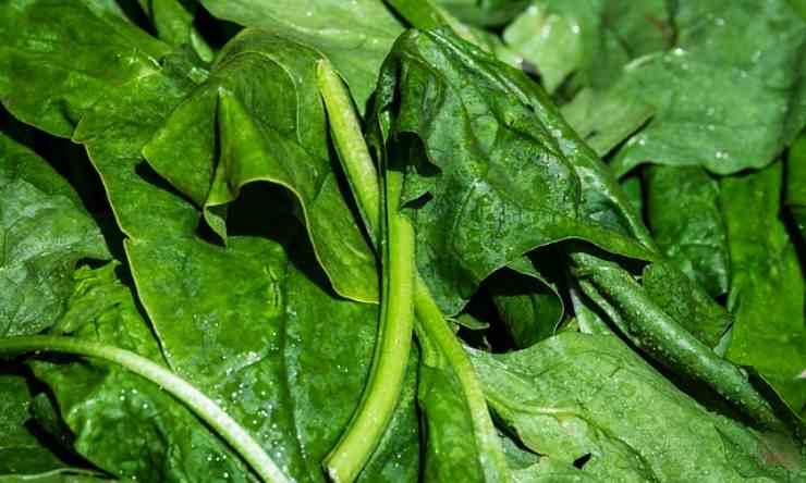 pollo spinaci piatto