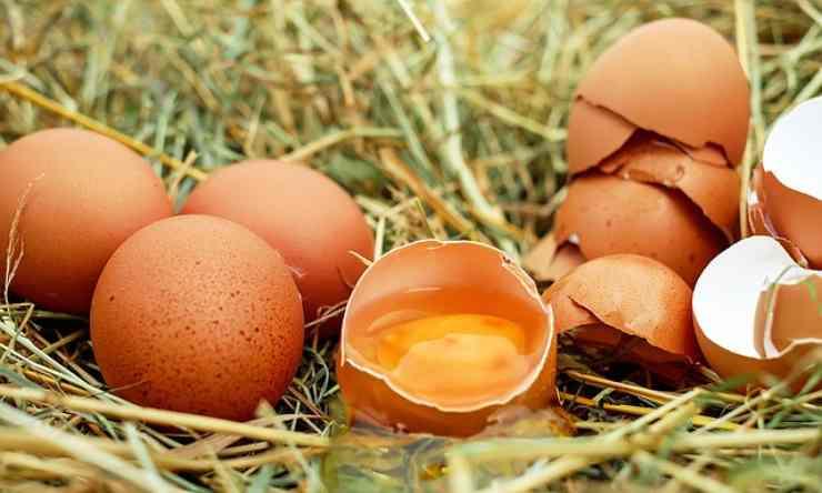 guscio uovo aperto