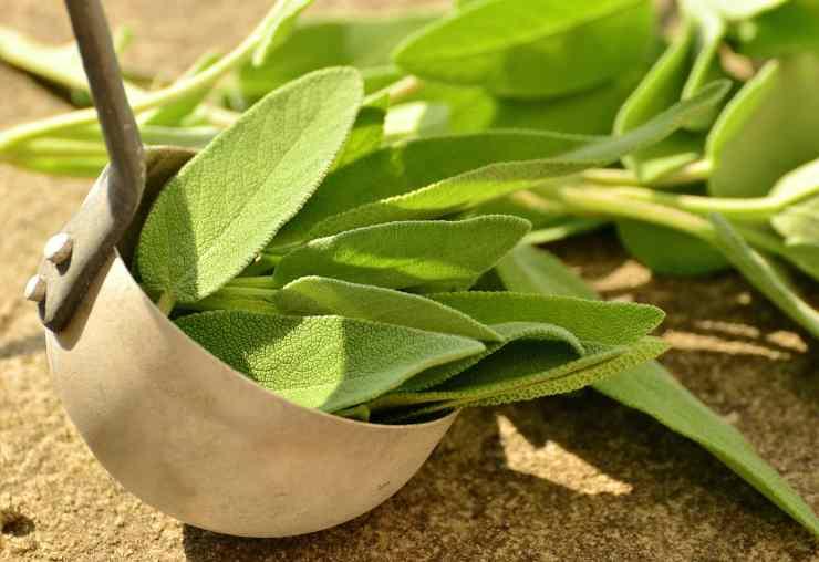 pianta aromatica