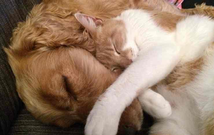 cani gatti dispensa problema