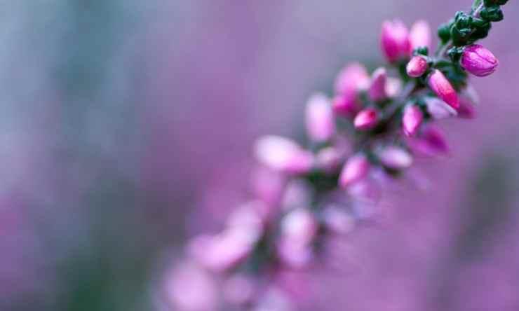 piante inverno
