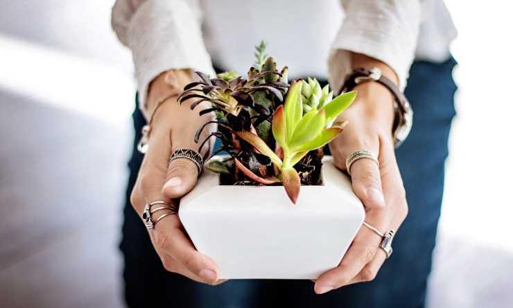 piante sane e rigogliose